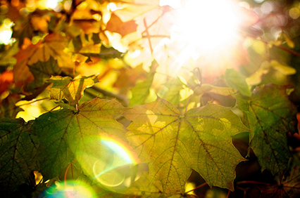 Sun shining through colourful leaves on an autumn day