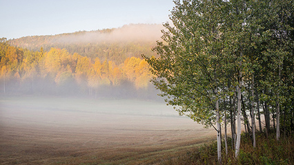 A capture of mist in Autumn